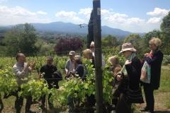 Wie man Wein anbaut