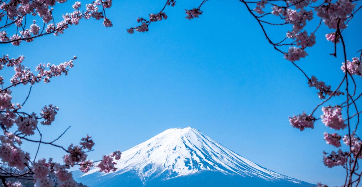 Berg Fuji mit Kirschblüten