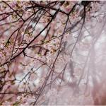 Japanische Gedichte – eine Entdeckung